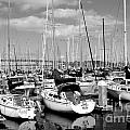 Sail Boats at San Francisco China Basin Pier 42 With The Bay Bridge in The Background . 7D7666 Poster by Wingsdomain Art and Photography