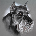 Schnauzer Poster by Patricia Ivy