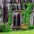 The Old Shed Print by Perry Webster