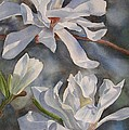 White Star Magnolia Blossoms Poster by Sharon Freeman