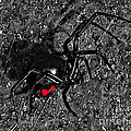Wicked Widow - Selective Color Print by Al Powell Photography USA