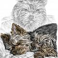 Yorkie - Yorkshire Terrier Dog Print by Kelli Swan