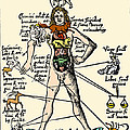 16th-century Medical Astrology Print by Cordelia Molloy