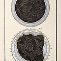 1731 Johann Scheuchzer Bible Flood World Poster by Paul D Stewart