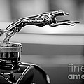 1925 Lincoln Town Car Hood Ornament Poster by Sebastian Musial