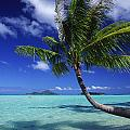Bora Bora, Palm Tree Poster by Ron Dahlquist - Printscapes