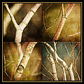 Branching Out Print by Bonnie Bruno