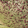 Fungal Spores, Sem Poster by Steve Gschmeissner