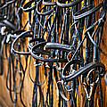 Horse bridles hanging in stable Print by Elena Elisseeva