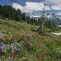 Mountain Meadow Poster by Bob Gibbons