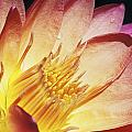 Pink Water Lily Print by Bill Brennan - Printscapes