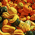 Pumpkins and gourds Print by Elena Elisseeva