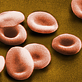 Sem Of Red Blood Cells Print by Omikron