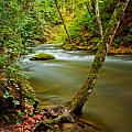 Whatcom Creek Poster by Idaho Scenic Images Linda Lantzy