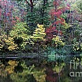 Sugar Ridge State Fish and wildlife Area Print by Jack R Brock