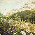 Field of daisies and wild flowers Poster by Sandra Cunningham