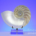 Logarithmic Spiral Print by Photo Researchers, Inc.