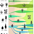 Plant Evolution, Diagram Poster by Gary Hincks