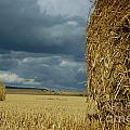 Hay bales in harvested corn field Print by Sami Sarkis