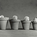 4 Pots Poster by Anne Geddes