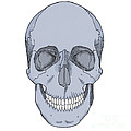 Illustration Of Anterior Skull Print by Science Source