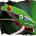 RED-EYED LEAF FROG Print by Larry Linton