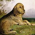 A Bloodhound in a Landscape Print by English school
