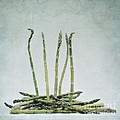 a bunch of asparagus Print by Priska Wettstein