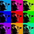 A Bunch of Bull Poster by Wingsdomain Art and Photography