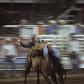 A Cowboy Rides A Bucking Bronco Poster by Taylor S. Kennedy