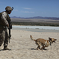 A Dog Handler Conducts Improvised Poster by Stocktrek Images