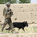 A Dog Handler Of The U.s. Marine Corps Print by Stocktrek Images