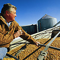 A Farmer Watches As His Corn Is Augered Poster by Joel Sartore
