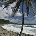 A Lone Palm Tree Grows From The Rocky Print by Michael Melford