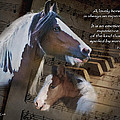 A Lovely Horse Print by Terry Kirkland Cook