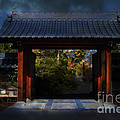 A Samurai.s Menagerie . 7D12779 Print by Wingsdomain Art and Photography