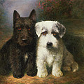 A Scottish and a Sealyham Terrier Print by Lilian Cheviot