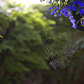 A Spider Web In A Garden Poster by Taylor S. Kennedy