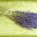 A Spray of Lavender Print by Judi Bagwell