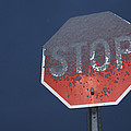 A Stop Sign Covered In Snow Poster by John Burcham