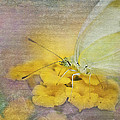 A Touch of Yellow Poster by Betty LaRue