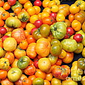A Variety of Fresh Tomatoes - 5D17904 Poster by Wingsdomain Art and Photography