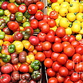 A Variety of Fresh Tomatoes Artichokes and Celeries - 5D17901-long Poster by Wingsdomain Art and Photography