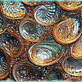 Abalones Poster by Judi Bagwell