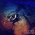 Abstract Peacock Print by Angela Doelling AD DESIGN Photo and PhotoArt