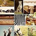 African Animals Safari Collage  Poster by Anna Omelchenko