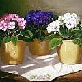 African Violets Poster by Linda Jacobus