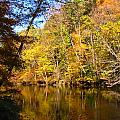 Alexandria Creek in the Fall Poster by Sara  Raber