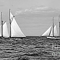America's Cup Contenders Idler and Hildegarde 1901 BW Print by Padre Art