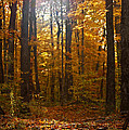 An Inspired Stroll Through the Forest Print by Inspired Nature Photography By Shelley Myke